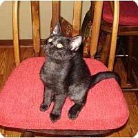 Adopt A Pet :: Inky - Lake Charles, LA