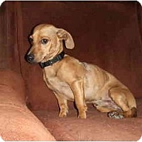 Adopt A Pet :: Willie - Chimayo, NM