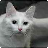 Adopt A Pet :: Wendy - Columbus, OH