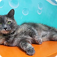 Adopt A Pet :: Marli - Newport Beach, CA