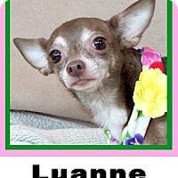 Adopt A Pet :: Luanne - Plano, TX
