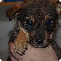 Adopt A Pet :: Rigly - Westminster, CO