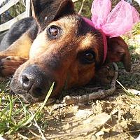 Adopt A Pet :: Jasmine - Louisville, KY