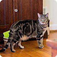 Adopt A Pet :: Daisy - Greensboro, GA