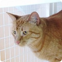 Adopt A Pet :: Stitch - McHenry, IL