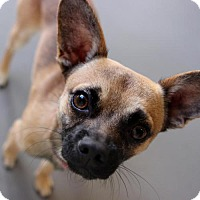 Adopt A Pet :: Flanders - Atlanta, GA