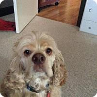 Adopt A Pet :: Anson - Alpharetta, GA