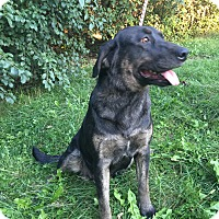 Catahoula Leopard Dog/Australian Shepherd Mix Dog for adoption in Richfield, Wisconsin - Sarah