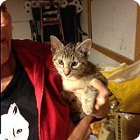 Adopt A Pet :: Princess Leia - Troy, OH