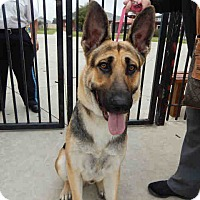 Adopt A Pet :: KIBA - SAN ANTONIO, TX