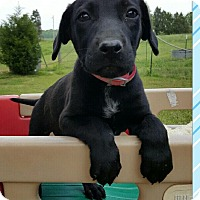 Adopt A Pet :: Luke - Rochester, NY