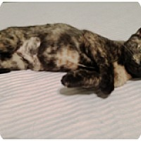 Adopt A Pet :: Fauna - Orange, CA