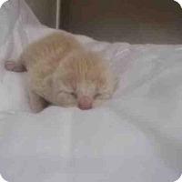 Adopt A Pet :: A008650 - Rosenberg, TX