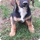 Adopt A Pet :: Hampton