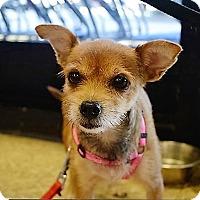 Adopt A Pet :: Pixie - Tavares, FL