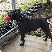 Adopt A Pet :: EMMA - Hibbing, MN
