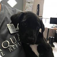 Adopt A Pet :: Vix - Freeport, FL