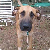 Adopt A Pet :: Wilson Harper - Alpharetta, GA