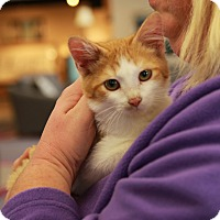 Adopt A Pet :: Diamondback - Rochester, MN