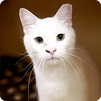 Adopt A Pet :: Cliff - Kettering, OH