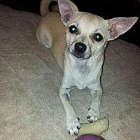 Adopt A Pet :: Twinkie - McKinney, TX