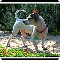 Adopt A Pet :: Ritchie Rich - Orange, CA