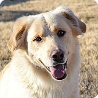 Adopt A Pet :: *Remington - PENDING - Westport, CT