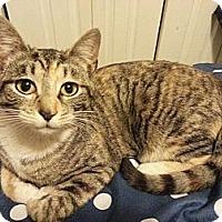 Adopt A Pet :: Isabella - Brooklyn, NY