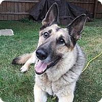 Adopt A Pet :: Maxx - Evergreen Park, IL