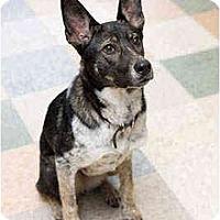 Adopt A Pet :: Kona - Portland, OR