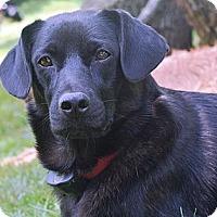 Adopt A Pet :: Mimi - Hop Bottom, PA