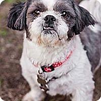 Adopt A Pet :: Georgie - Sherman Oaks, CA