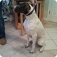 Adopt A Pet :: Britta - Streetsboro, OH