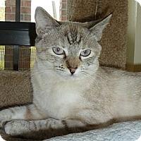 Adopt A Pet :: Bree - Lake Charles, LA