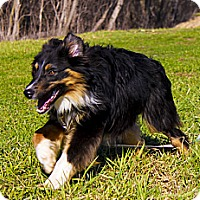 Adopt A Pet :: Bourbon - Washington, IL