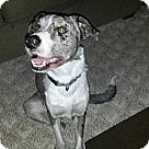 Adopt A Pet :: SINATRA (Courtesy List)