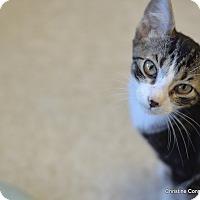 Adopt A Pet :: Marvin - Island Park, NY