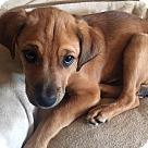 Adopt A Pet :: Adorable Quincy
