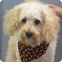 Adopt A Pet :: Beasley - Hagerstown, MD