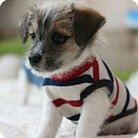 Adopt A Pet :: Otto - Buena Park, CA