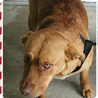 Adopt A Pet :: Lilly from Duplin - Midlothian, VA