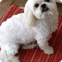 Adopt A Pet :: ROMEO - DeLand, FL