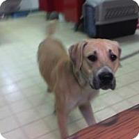 Adopt A Pet :: Bruno - Lake City, FL