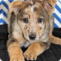 Adopt A Pet :: Mufasa - Starkville, MS