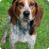 Adopt A Pet :: Suzy Q - Chester Springs, PA