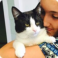 Adopt A Pet :: Jackson - Long Beach, NY