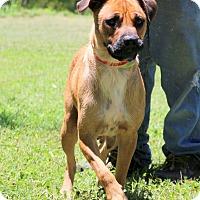 Adopt A Pet :: Hope~meet me~ - Glastonbury, CT
