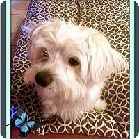 Adopt A Pet :: Clancy - Murrieta, CA