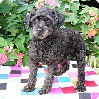 Adopt A Pet :: Packy - Winfield, PA
