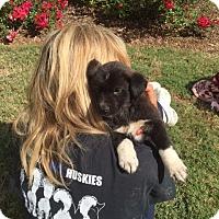 Adopt A Pet :: Aston - Roswell, GA